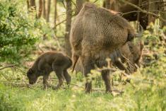 Jarní Traviny a první letošní tele